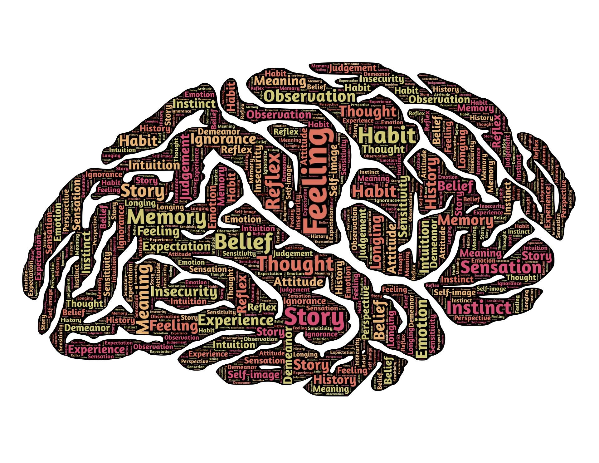Ondernemen en het menselijk brein